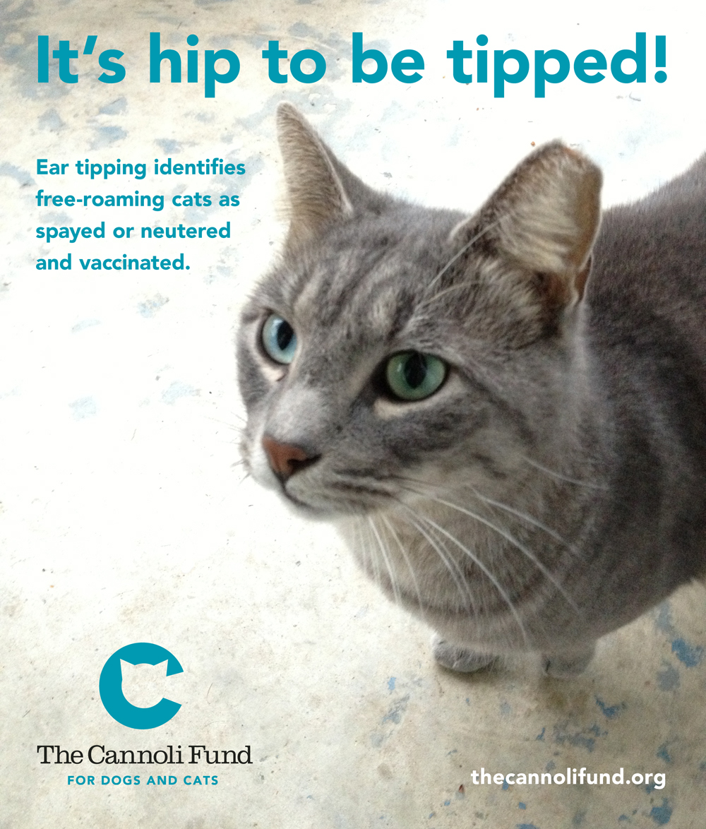 What Happens To Feral Cats At The Humane Society
