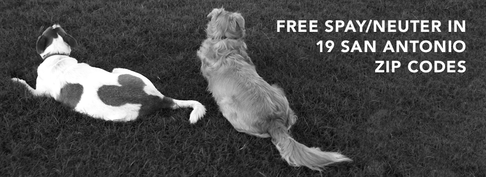 Free Spay/Neuter in 19 San Antonio Zip Codes